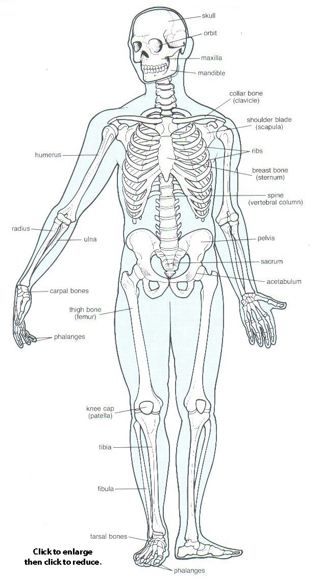 oilsandplants.com ~ The Skeletal System