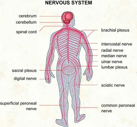 Oilsandplants Nervous System