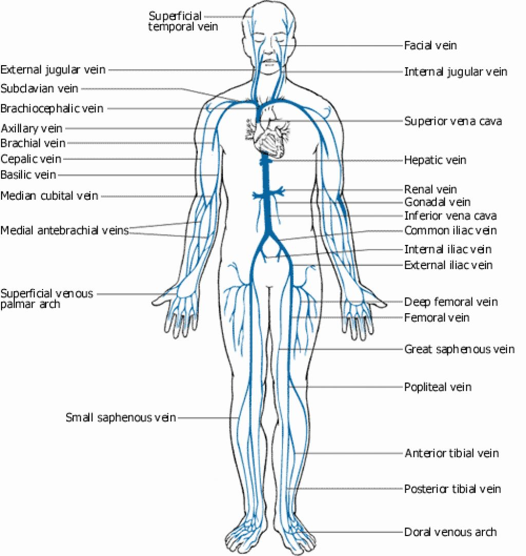 Oilsandplants Venous System